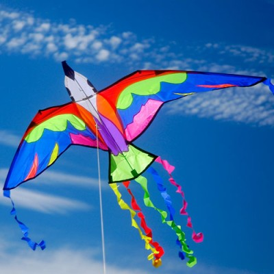 Bermuda Bird Fun Kite - Brookite